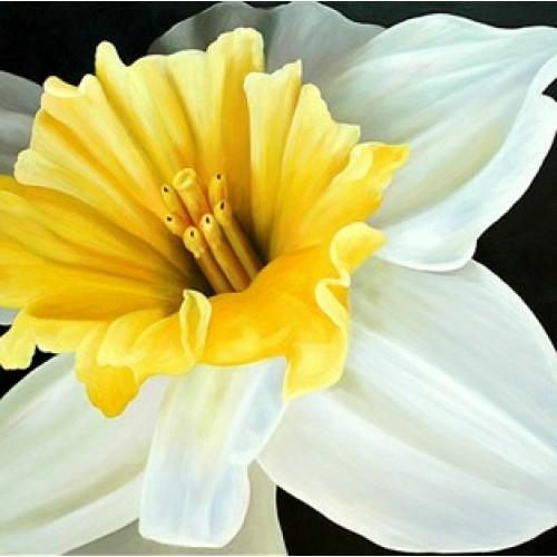 Картина с белыми цветами купить в салоне мебели Театр Диванов в Калининграде
